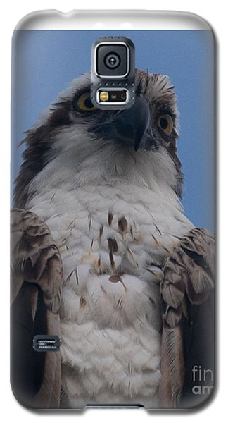 Hawk Stare Galaxy S5 Case