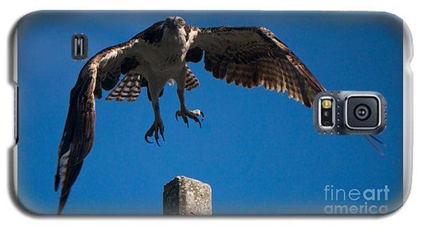 Hawk Taking Off Galaxy S5 Case