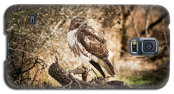 Hawk Through A Thicket Galaxy S5 Case by Robert Frederick