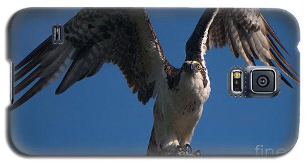 Hawk Wings Galaxy S5 Case