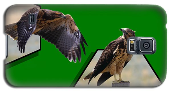 Hawks Galaxy S5 Case