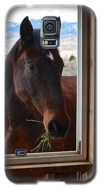 Hay There Galaxy S5 Case