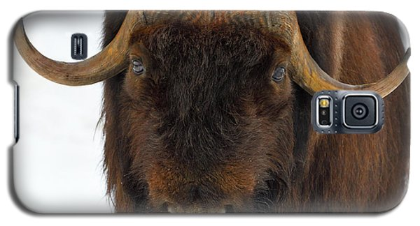 Head Butt Galaxy S5 Case