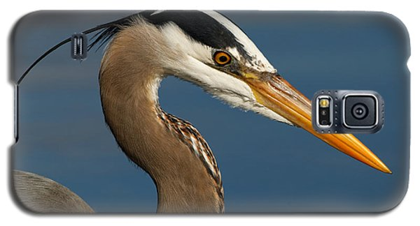 Head Of A Great Blue Heron Galaxy S5 Case
