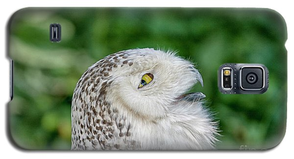 Head Of Snowy Owl Galaxy S5 Case by Patricia Hofmeester