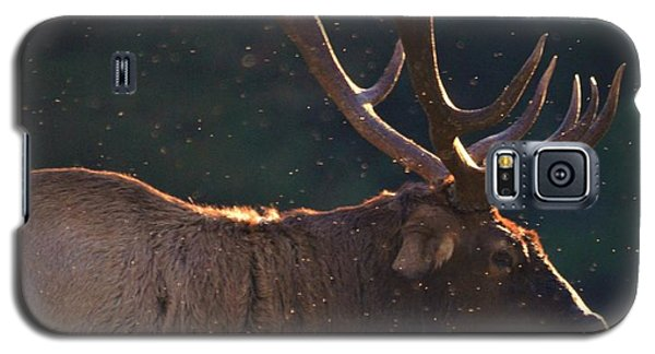 Head Of The Herd Galaxy S5 Case