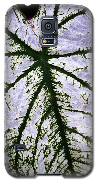 Galaxy S5 Case featuring the photograph Heart Shaped Leaf by Catherine Lau