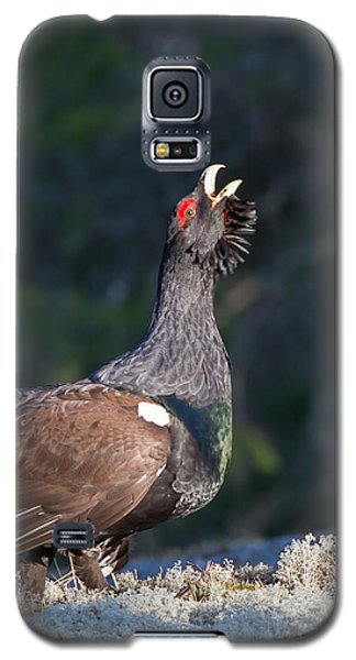 Heather Cock In The Morning Sun Galaxy S5 Case by Torbjorn Swenelius