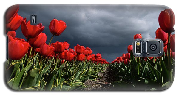 Heavy Clouds Over Red Tulips Galaxy S5 Case by Mihaela Pater
