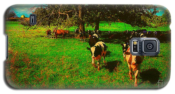 Hebron Il Cows Pasture Galaxy S5 Case
