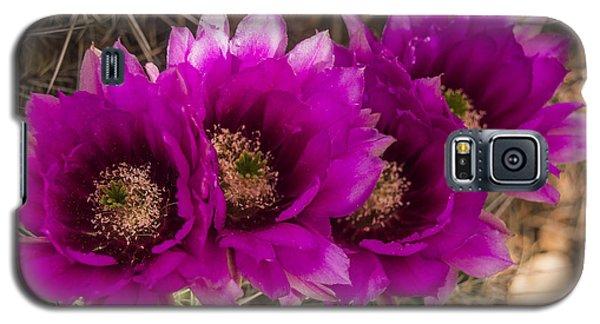 Hedgehog Lineup Galaxy S5 Case