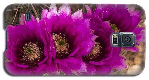 Hedgehog Lineup Galaxy S5 Case by Laura Pratt