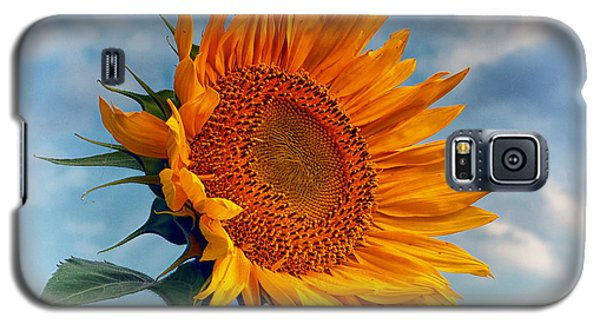 Helianthus Annuus Greeting The Sun Galaxy S5 Case