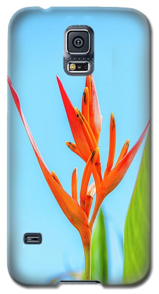 Heliconia Flower Galaxy S5 Case