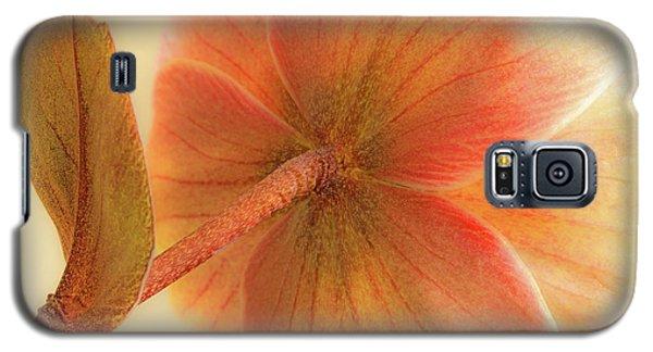 Hellebore Galaxy S5 Case