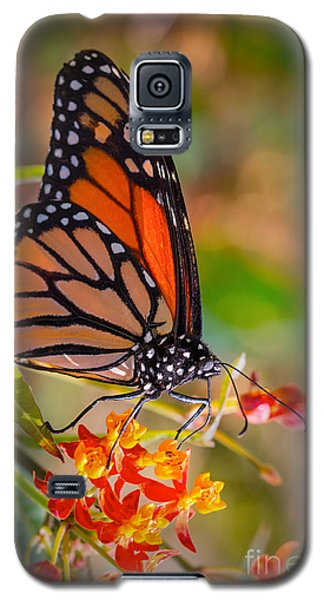 Hello Butterfly Galaxy S5 Case