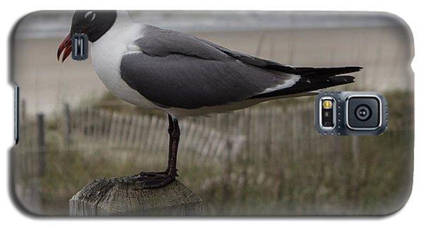 Hello Friend Seagull Galaxy S5 Case