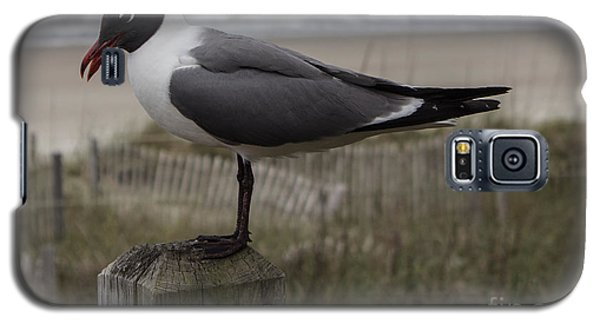 Hello Friend Seagull Galaxy S5 Case