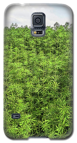 Hemp Plantation Galaxy S5 Case