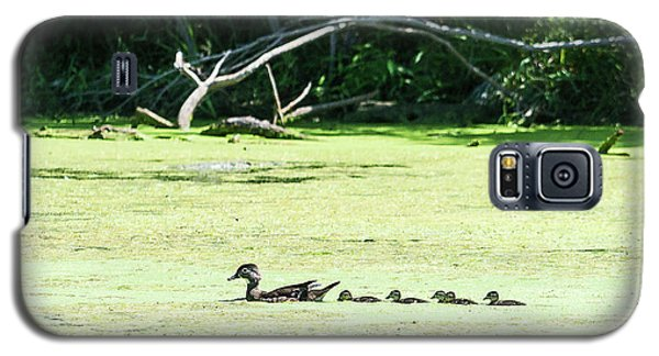 Hen And Baby Wood Ducks Galaxy S5 Case