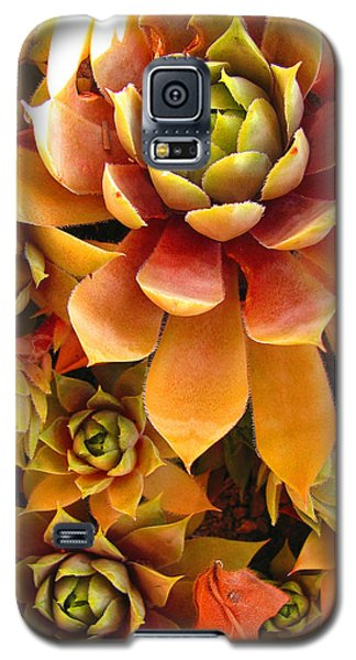 Hen And Chicks - Perennial Galaxy S5 Case