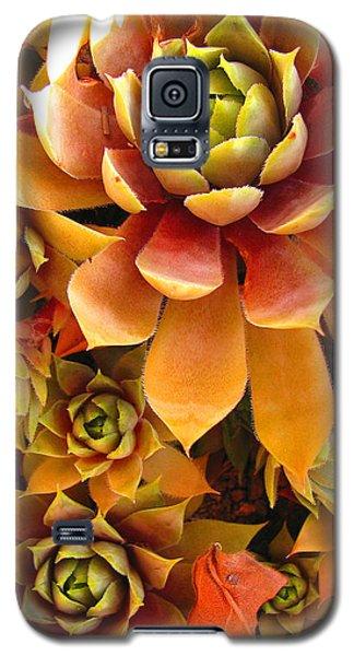 Galaxy S5 Case featuring the photograph Hen And Chicks - Perennial by Brooks Garten Hauschild