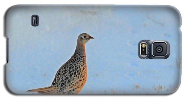 Hen Pheasant Galaxy S5 Case