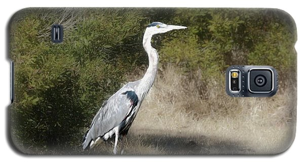 Galaxy S5 Case featuring the photograph Henry The Heron by Benanne Stiens