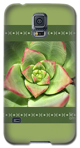 Hens And Chicks Succulent And Design Galaxy S5 Case by Joy Watson