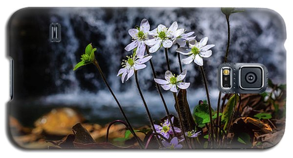 Galaxy S5 Case featuring the photograph Hepatica And Waterfall by Thomas R Fletcher