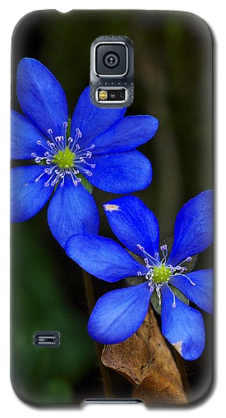 Hepatica Nobilis Galaxy S5 Case