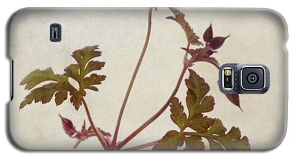 Beautiful Galaxy S5 Case - Herb Robert - Wild Geranium  #flower by John Edwards