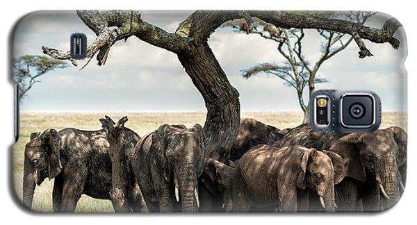 Herd Of Elephants Under A Tree In Serengeti Galaxy S5 Case