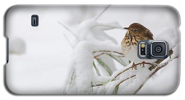 Hermit Thrush In Snow Galaxy S5 Case