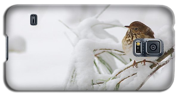 Hermit Thrush In Snow Galaxy S5 Case