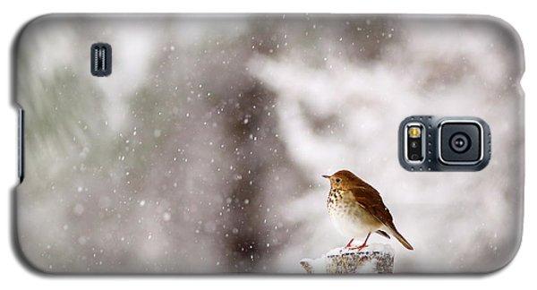 Hermit Thrush On Post In Snow Galaxy S5 Case