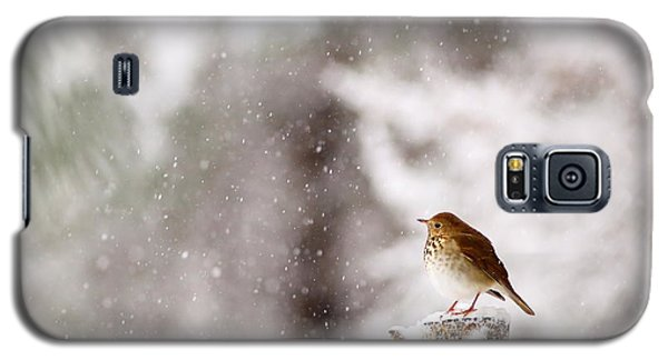 Hermit Thrush On Post In Snow Galaxy S5 Case