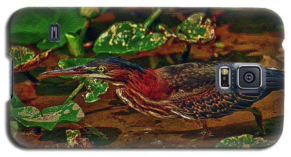 Heron Hdr Galaxy S5 Case by Travis Burgess