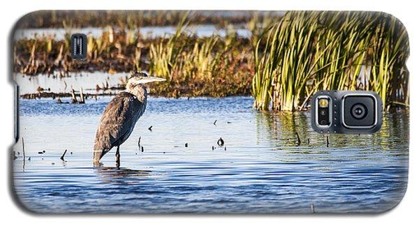 Heron - Horicon Marsh - Wisconsin Galaxy S5 Case