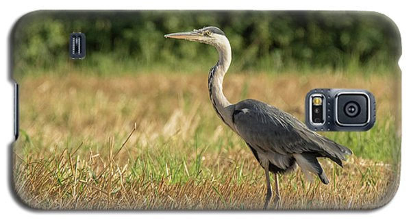 Heron In The Field Galaxy S5 Case