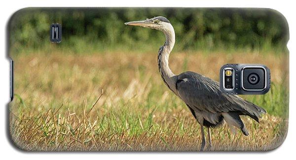 Heron In The Field Galaxy S5 Case