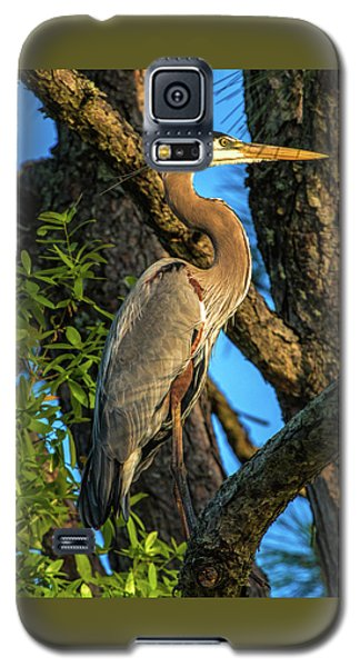 Heron In The Pine Tree Galaxy S5 Case