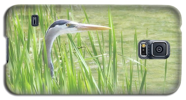 Heron In The Reeds Galaxy S5 Case by Anita Oakley