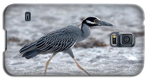 Yellow-crowned Night Heron On A Mission Galaxy S5 Case