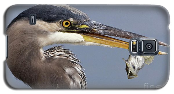 Herons Appetizer Galaxy S5 Case