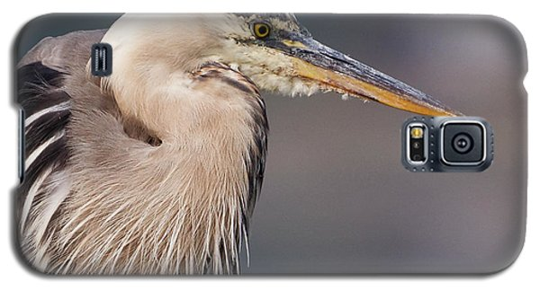 Herons Pause Galaxy S5 Case