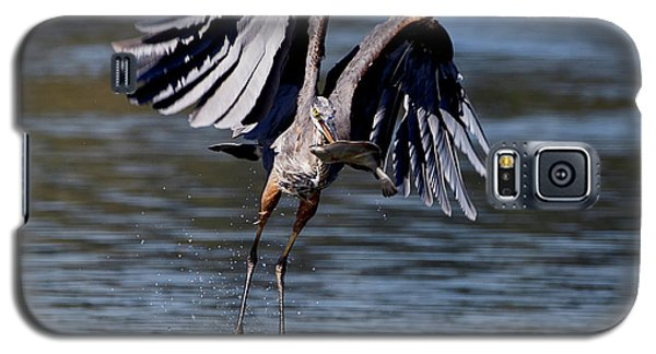 Great Blue Heron In Flight With Fish Galaxy S5 Case