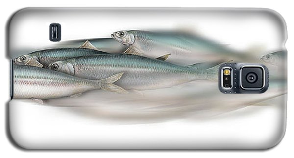 Herring School Of Fish - Clupea - Nautical Art - Seafood Art - Marine Art - Game Fish Galaxy S5 Case