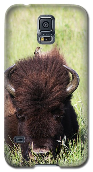 Hey There Is A Bird On Your Head Galaxy S5 Case