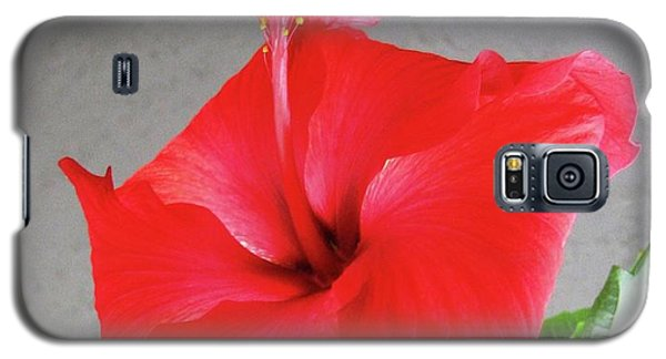 Hibiscus #2 Galaxy S5 Case